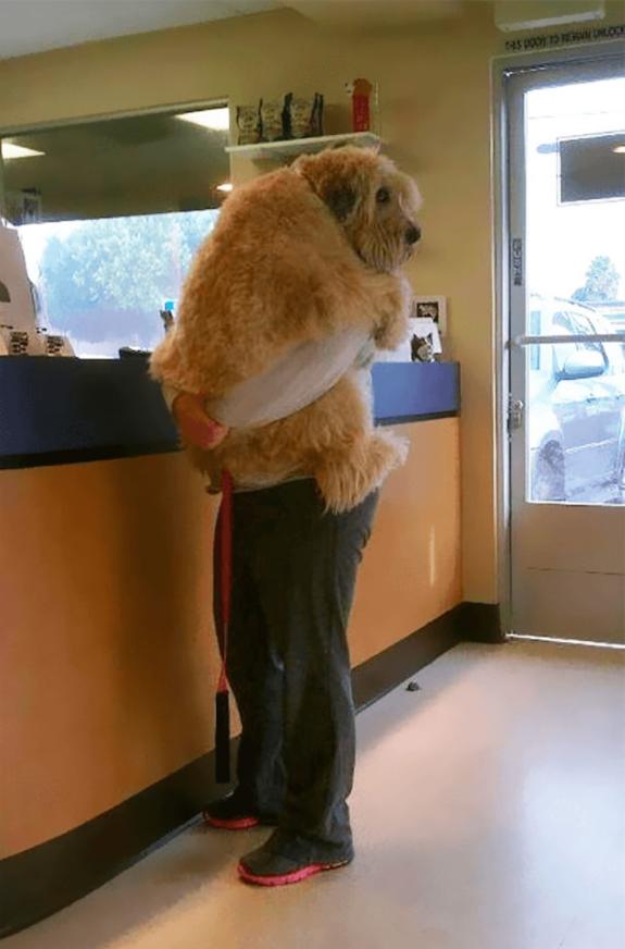 perro gigante asustado
